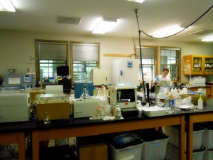 One of the labs.