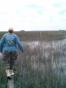 First visit to my working site - following Tracy to the marshes.