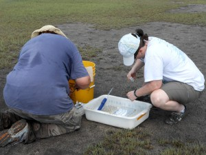 Tracy and Susan pre-processing the water samples before bringing them back to the lab