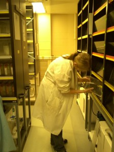 This is me collecting wildtype zebrafish. We had them breed, and we would use their embryos.