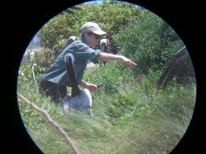 Erin checking on the progress of some active nests.  Picture taken through a scope.