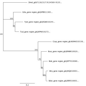 Dihydropteridine reductase (Dhpr) gene phylogenetic tree