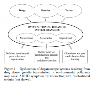 Diagram of the dynamic developmental behavioral theory of ADHD. Credit: Sagvolden, Johansen, Aase, & Russell (2005).